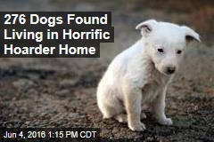 276 Dogs Found Living in Horrific Hoarder Home