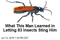 What This Man Learned in Letting 83 Insects Sting Him