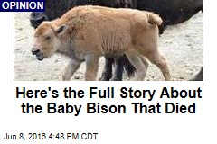 Here's the Full Story About the Baby Bison That Died