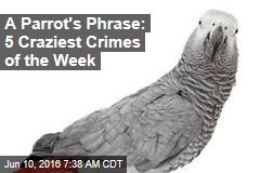 A Parrot's Phrase: 5 Craziest Crimes of the Week