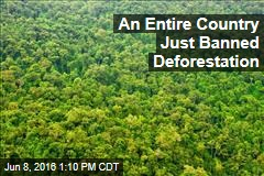 An Entire Country Just Banned Deforestation