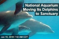 National Aquarium Moving Its Dolphins to Sanctuary