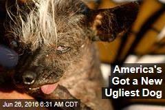 America's Got a New Ugliest Dog
