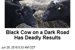 Black Cow on a Dark Road Has Deadly Results