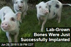 Lab-Grown, Living Bones Were Just Successfully Implanted