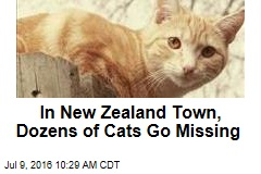 In New Zealand Town, Dozens of Cats Go Missing