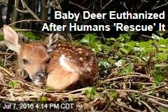 Baby Deer Euthanized After Humans 'Rescue' It