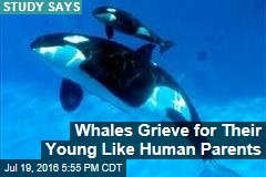 Whales Grieve for Their Young Like Human Parents