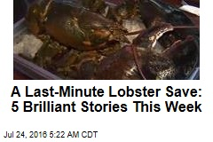 A Last-Minute Lobster Save: 5 Brilliant Stories This Week