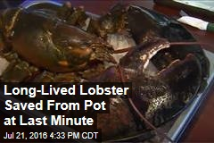This May Be the Largest Lobster You'll Ever See