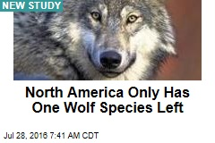 North America Only Has One Wolf Species Left