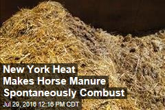 New York Heat Makes Horse Manure Spontaneously Combust