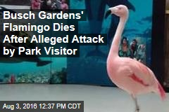 Busch Gardens' Flamingo Dies After Alleged Attack by Park Visitor
