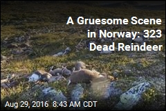 Why More Than 300 Reindeer Were Found Dead in Norway