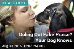 Doling Out Fake Praise? Your Dog Knows