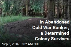 In Abandoned Cold War Bunker, a Determined Colony Survives