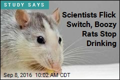 Scientists Flick Switch, Boozy Rats Stop Drinking