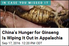 China's Hunger for Ginseng Is Wiping It Out in Appalachia