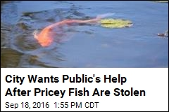City Wants Public's Help After Pricey Fish Are Stolen