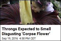 Throngs Expected to Smell Disgusting 'Corpse Flower'