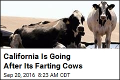 Cow Farts Can Now Be Regulated in California