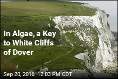 In Algae, a Key to White Cliffs of Dover