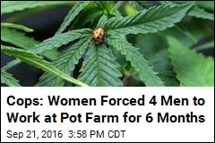 Cops: Women Forced 4 Men to Work at Pot Farm for 6 Months