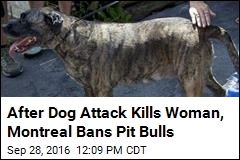 In 'Contentious' Move, Montreal Bans Pit Bulls