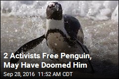 Activists May Have Accidentally Doomed Penguin