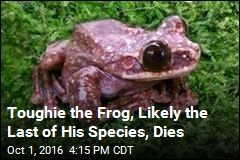 Toughie the Frog, Likely the Last of His Species, Dies