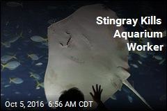 Stingray Kills Aquarium Worker