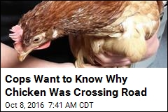 Cops Want to Know Why Chicken Was Crossing Road