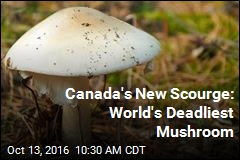 Canada's New Scourge: World's Deadliest Mushroom