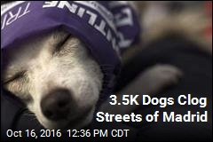 3.5K Dogs Clog Streets of Madrid