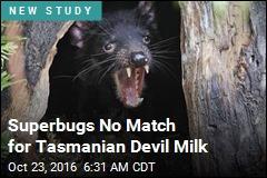 Tasmanian Devil Might Hold the Kryptonite to Superbugs