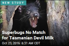 Tasmanian Devil Might Hold the Kryptonite to Superbugs
