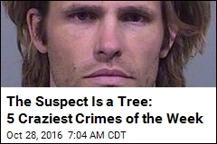 The Suspect Is a Tree: 5 Craziest Crimes of the Week