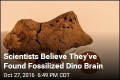 Scientists Believe They've Found Fossilized Dino Brain