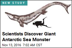Scientists Discover Giant Antarctic Sea Monster