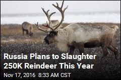 Herders to Russia: Don't Kill Off Our Reindeer