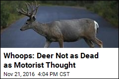 Whoops: Deer Not as Dead as Motorist Thought