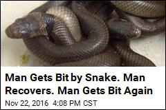 Man Gets Bit by Snake. Man Recovers. Man Gets Bit Again