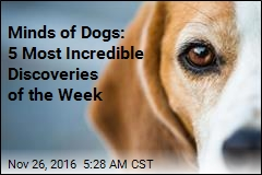 Minds of Dogs: 5 Most Incredible Discoveries of the Week
