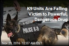 First It Killed Prince. Now Potent Drug Is Harming Police Dogs