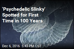 'Psychedelic Slinky' Spotted for First Time in 100 Years