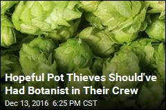 Hopeful Pot Thieves Should've Had Botanist in Their Crew