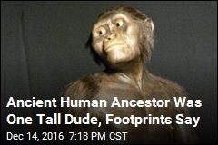 Ancient Human Ancestor Was One Tall Dude, Footprints Say