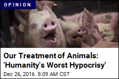 Our Treatment of Animals: 'Humanity's Worst Hypocrisy'