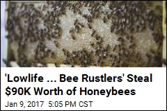 'Lowlife ... Bee Rustlers' Steal $90K Worth of Honeybees