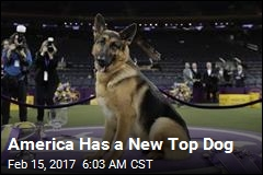 German Shepherd Is America's New Top Dog